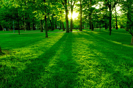 Árvores e gramado ao entardecer