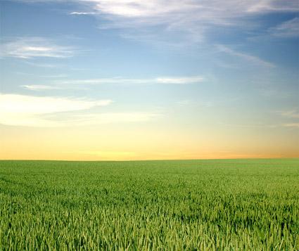 เย็นหญ้าภาพวัสดุ