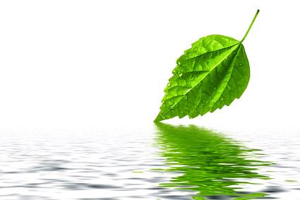 葉と画像素材の反射