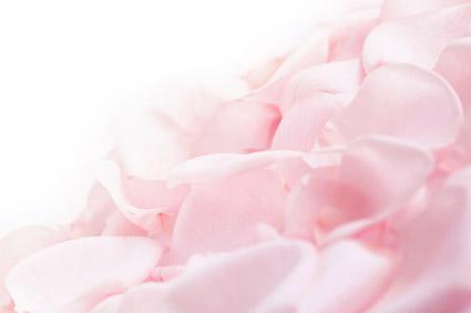 Mous pétales de rose roses