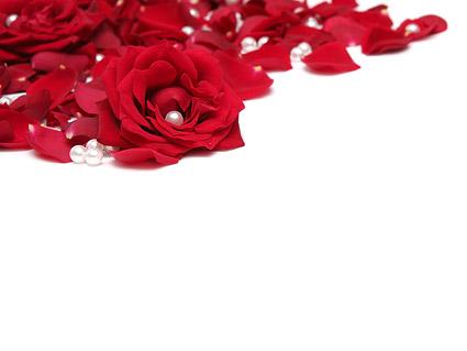 真珠の赤いバラの花びら