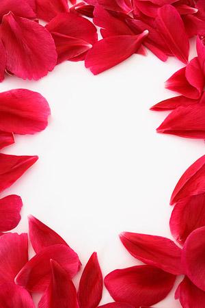 สีแดงกุหลาบ petals น้ำย้อยเฌอร่า