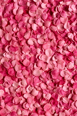 กุหลาบกลีบดอกไม้สีชมพูพื้นหลังภาพวัสดุ