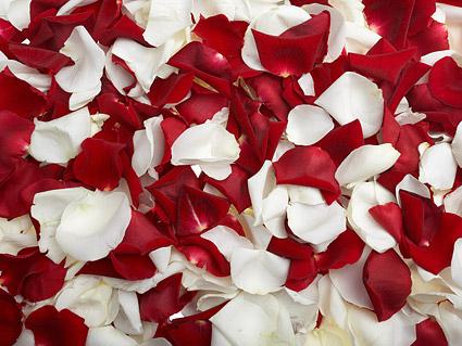 Rosas rojas y pétalos de rosas blancas