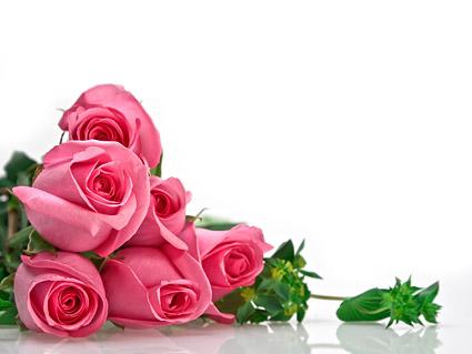 Букет из розовых роз картины материал