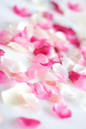 バラの花びらの画像