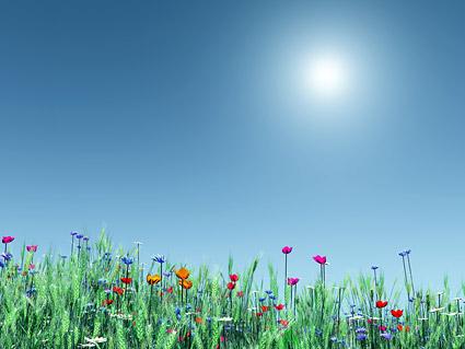 色の花や小麦の画像