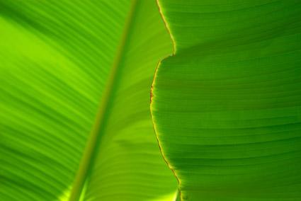 葉品質画像素材-3
