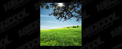 Matériel de photo pour le ciel Grass