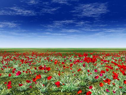 ดอกไม้สีแดงบน grassland วัสดุรูปภาพ