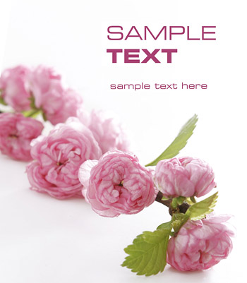 Calidad de imagen de flor rosa material-2