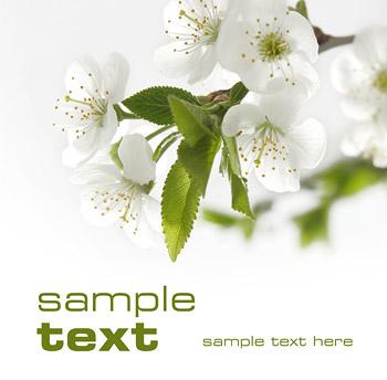 Material de qualidade de imagem de flores brancas