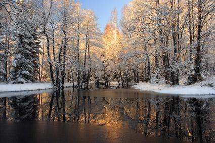 Snowmelt ในวัสดุรูปภาพป่า