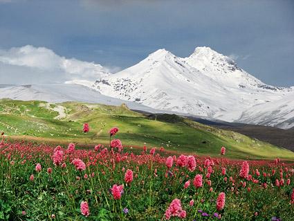 ภูเขา snow-capped วัสดุรูปภาพดอกไม้