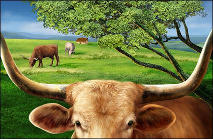 Rinder auf der Ebene von HD-layered psd