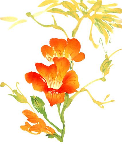 水彩絵画花件