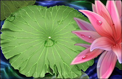 Lotus et eau