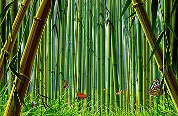 Bambou et papillon