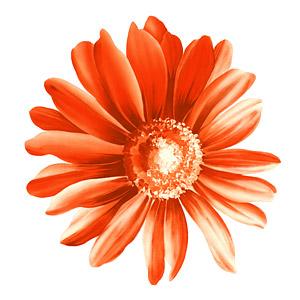 Flores pintados à mão em camadas de material psd-12