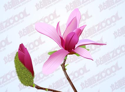 Matériau de vecteur de Magnolia Rose