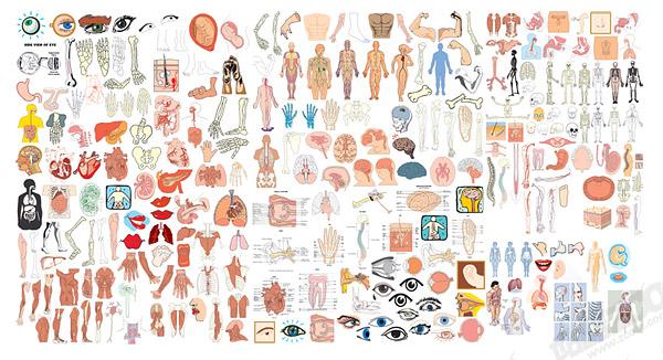 โครงสร้างของอวัยวะมนุษย์ส่วนของเวกเตอร์