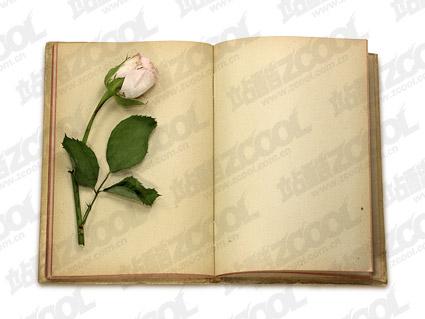 Роза и хорошо иллюстрированные книги
