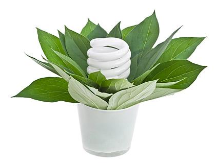 พืชสีเขียวและหลอดไฟประหยัดพลังงานภาพวัสดุ