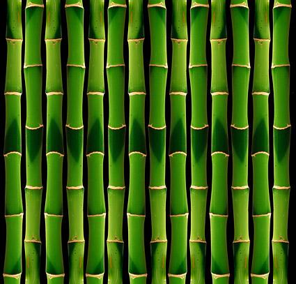 Fondo de bambú verde de la imagen material-2