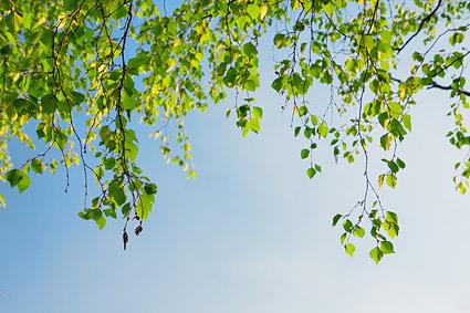 Plantas verdes sob o material de imagem do céu azul