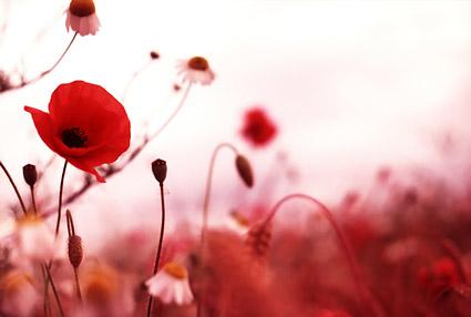 붉은 꽃 꽃 그림 자료