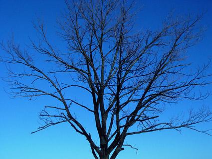 木の素材の葉はありません。