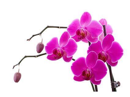 Orquídeas blancas imagen material-9