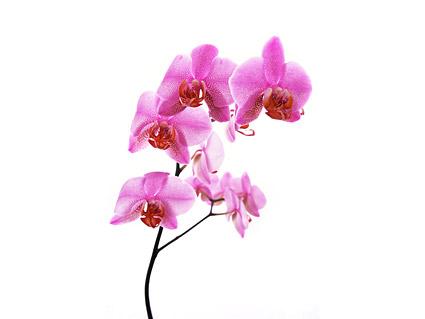 Tableau blanc orchidée matériel-8.