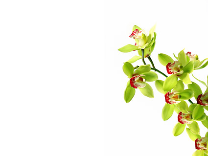 Orquídeas blancas imagen material-1