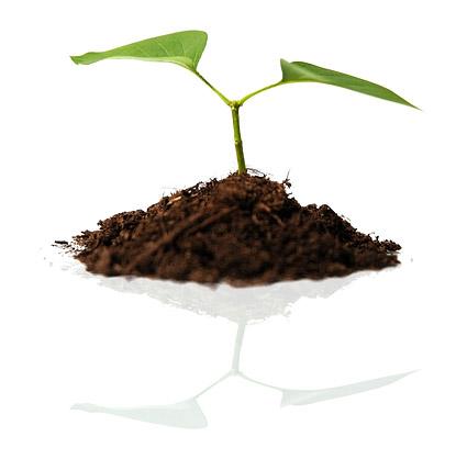 土壌および植物の素材画像