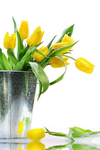 Material de imagem de tulipa amarela