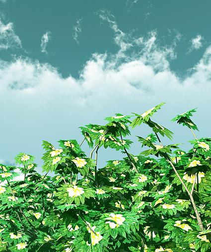 青い空と植物写真素材