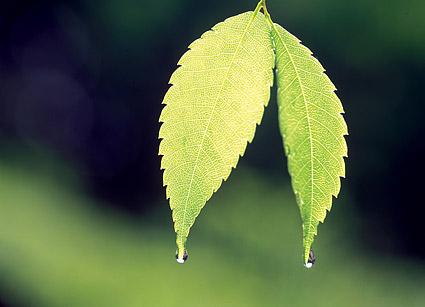 Deux feuilles avec de l'eau descend matériel photo