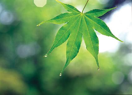 Material de imagen de hoja verde