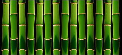 Fond vert bambou du matériel photo-2