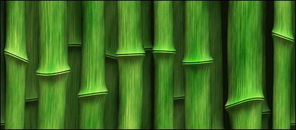 Fond vert bambou du matériel photo