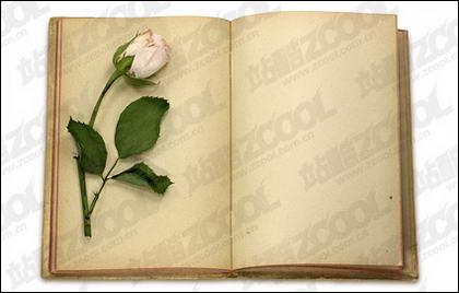 Rose y los finos libros ilustrados