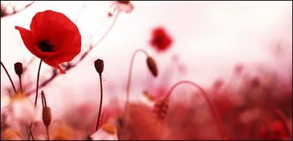 Красный цветок цветочные картины материал