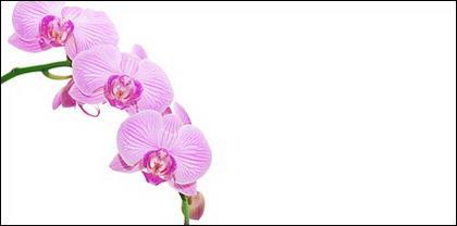 Orquídeas blancas imagen material-10