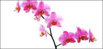Tableau blanc orchidée matériel-7.