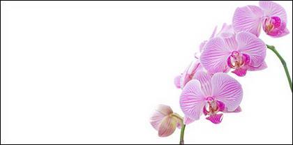 Image blanc orchidée matériel-6.