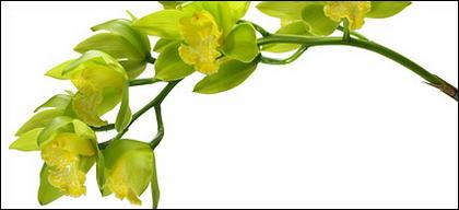 Image blanc orchidée matériel-5.
