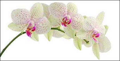 Image blanc orchidée matériel-4.