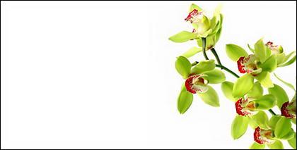 Tableau blanc orchidée matériel-1.