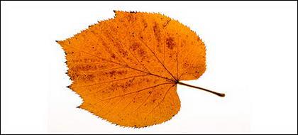 Fotos de otoño deja material
